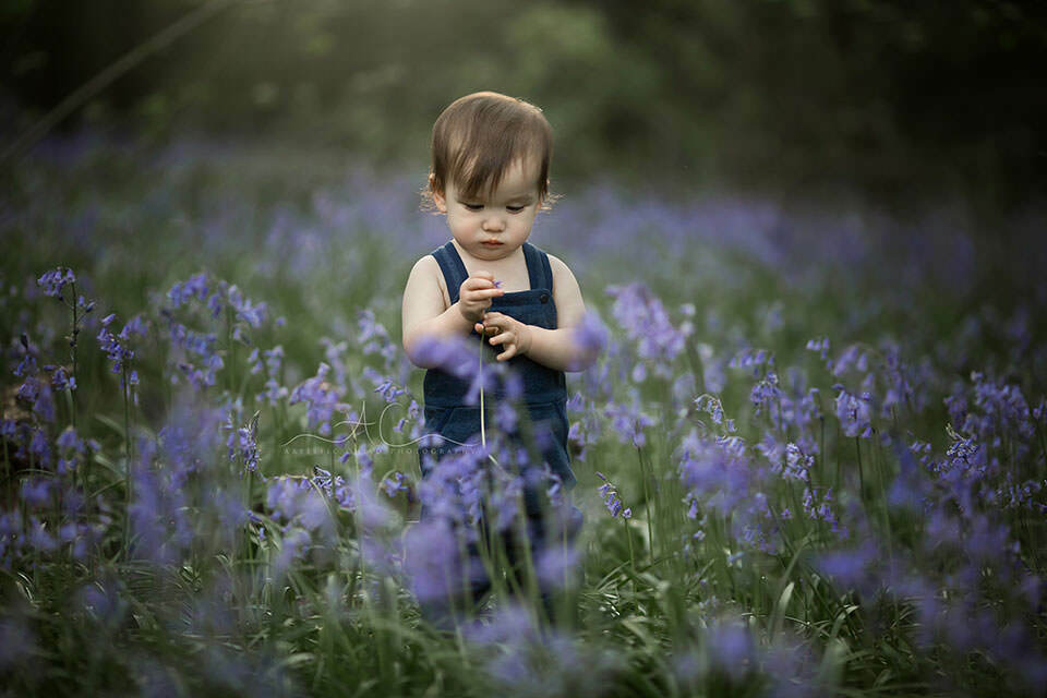 1 year old boy looks at the bluebell flower | London