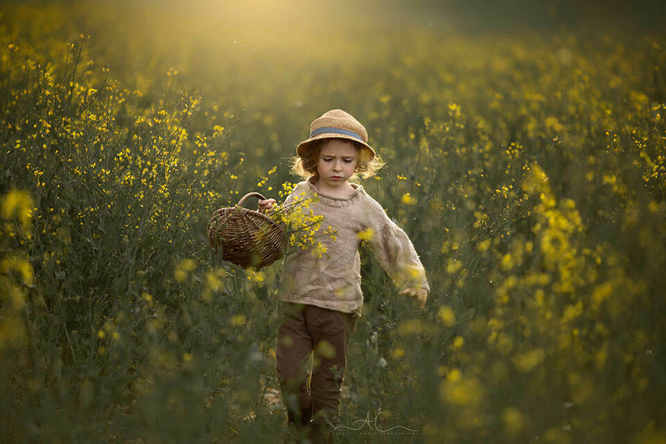 Rapeseed Field South East London Child Photography   backlit spring portrait of a 4 year old boy walking in the field of yellow